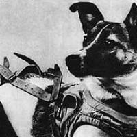 Astronot Köpek